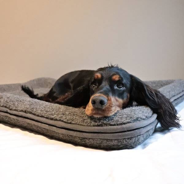 Image of Dog bed in wool with raised edges